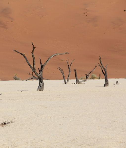 Foresta cristallizzata Namibia